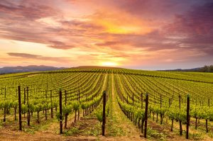 Napa Valley Wine Tour California
